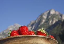 Suedtirol, Freienfeld, Pfulters, Gartnerhof, Familie Edmund Griesser, Roter Hahn, Ferien auf dem Bauernhof, Erdbeerhof, Erdbeeren anbau,